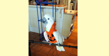 Mango Halloween Photo