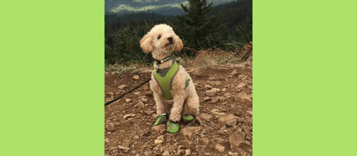 Hiker Dog Bentley
