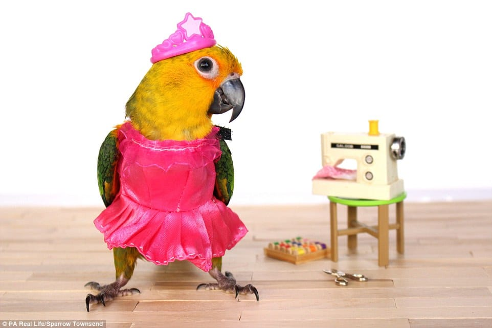 bird dressed up