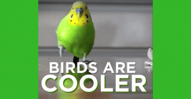 birds are cooler