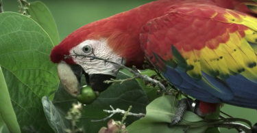 parrot confidential feature documentary