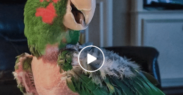 rescue parrot hated people until