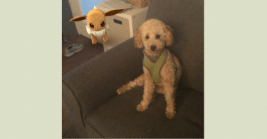 Bentley with Pokemon