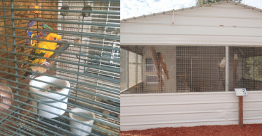Rescue vs Sanctuary: Where Would You Prefer to Live, Cage or a Flight