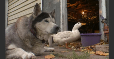max and quackers unlikely best friends