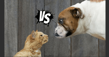cats vs dogs who wins