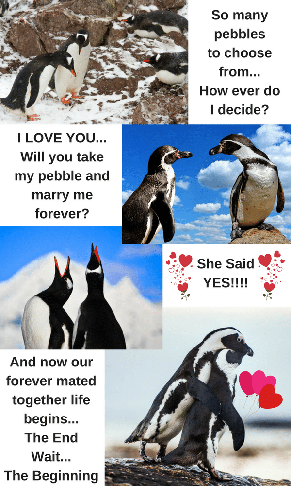 penguins mate for life