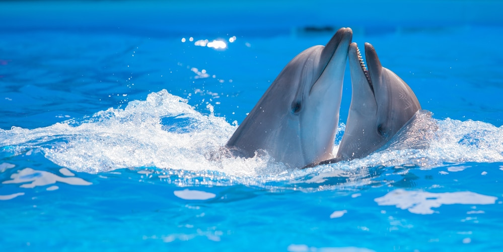 did you know dophins have names