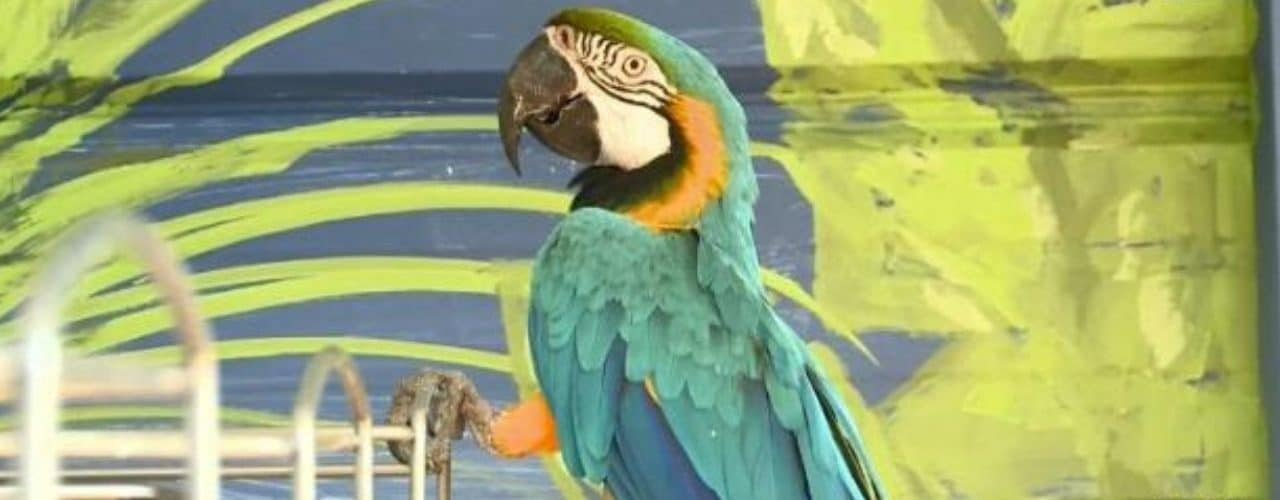 Birds on the Brink in the news from WRDW-TV News 12 Channel